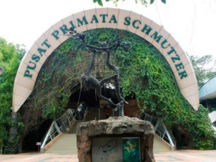 Mengenal Lebih Dekat Primata di Pusat Primata Schmutzer