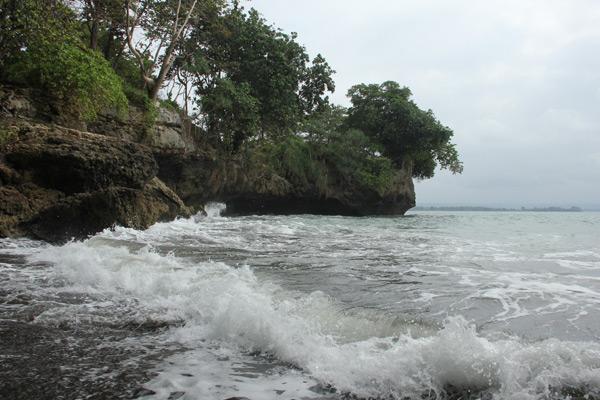 Pohon-pohon yang tumbuh disekitar Pantai Batu Karas