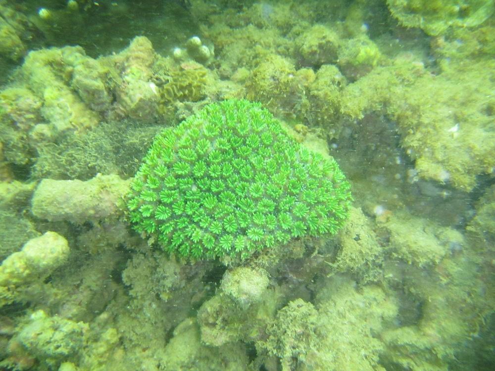 Biota laut di sekitar Pantai Pasir Putih