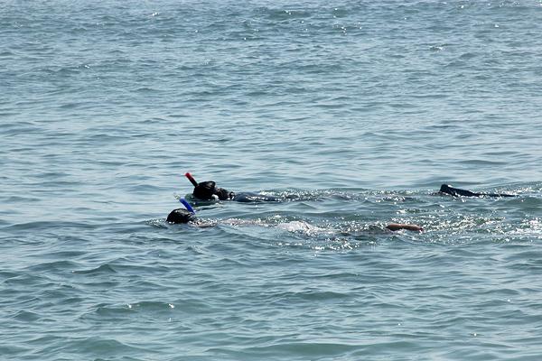 Snorkeling, salah satu kegiatan seru yang bisa dilakukan di Pantai Pasir Putih