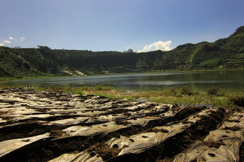 Air yang tertampung di telaga dimanfaatkan masyarakat sekitar untuk mengairi lahan pertanian kentang
