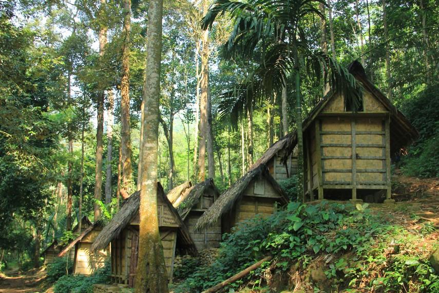 Hasil berupa kopi, padi, dan umbi-umbian menjadi komoditas yang paling sering ditanam oleh masyarakat Baduy