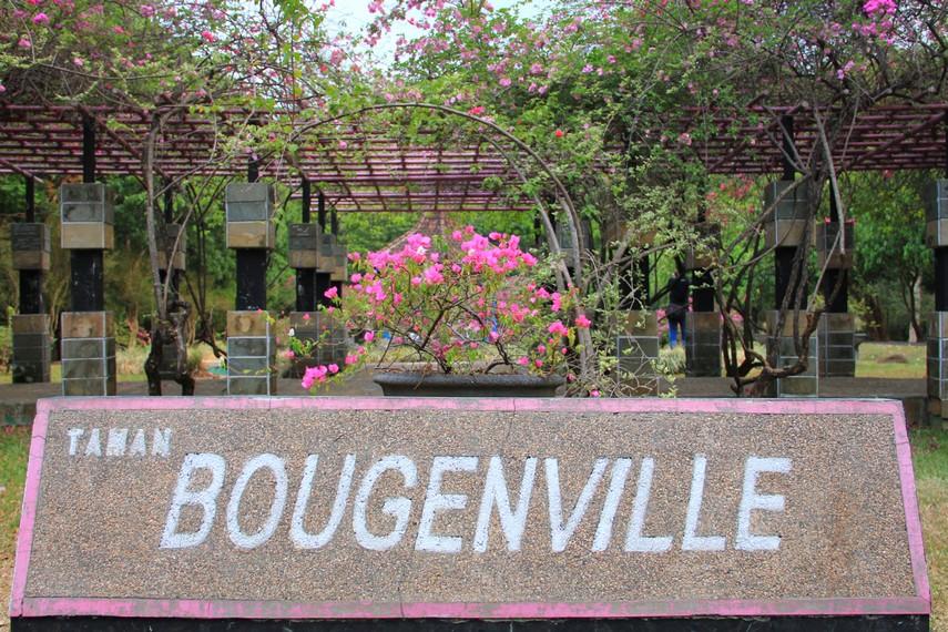 Taman Bougenville salah satu taman yang berada di dalam kawasan Kebun Raya Purwodadi