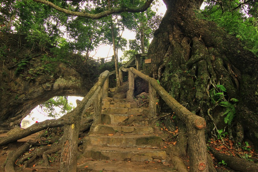 Pohon-pohon di sini ada yang sudah berumur ratusan tahun dengan akar-akarnya yang terlihat tua