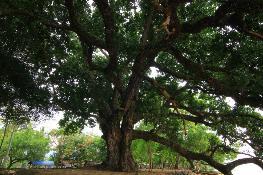 Banyaknya pepohonan yang tumbuh di sekitar pantai membuat nuansa kesejukan begitu terasa di sekitar Pantai Matahari Carita