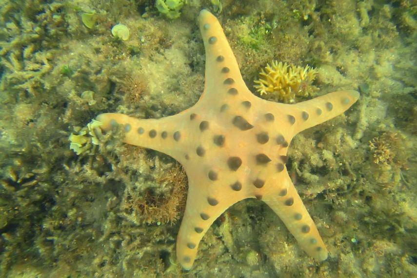 Ada 1.600 jenis binatang yang menghuni perairan di Gili Kedis