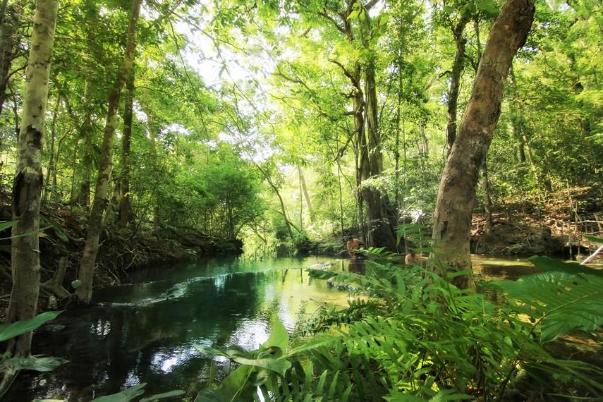 Air Terjun Mata Jitu letaknya tersembunyi di dalam hutan