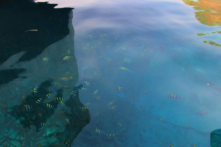 Air di Pulau Moyo sangat jernih sehingga ikan-ikan cantik dapat terlihat dari permukaan
