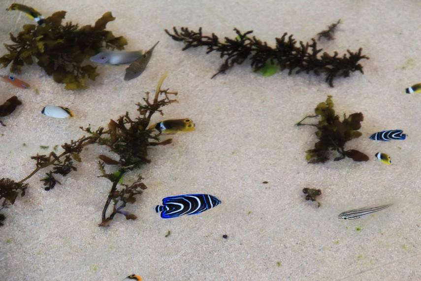 Aneka Biota laut seperti ikan hias dengan warna-warna indah hidup di pantai ini