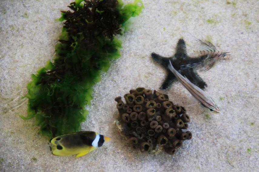 Aneka jenis ikan dengan warna-warna indah hidup di Pantai ini