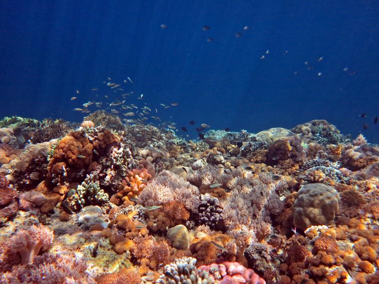 Aneka terumbu karang di perairan Pulau kambing