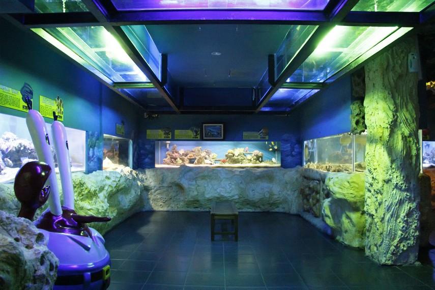 Aquarium berisi aneka ikan-ikan hias yang bisa menghibur pengunjung