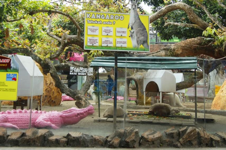 Arena Kangaroo tempat pengunjung bisa melihat langsung Kangaroo hidup di Batu Secret Zoo
