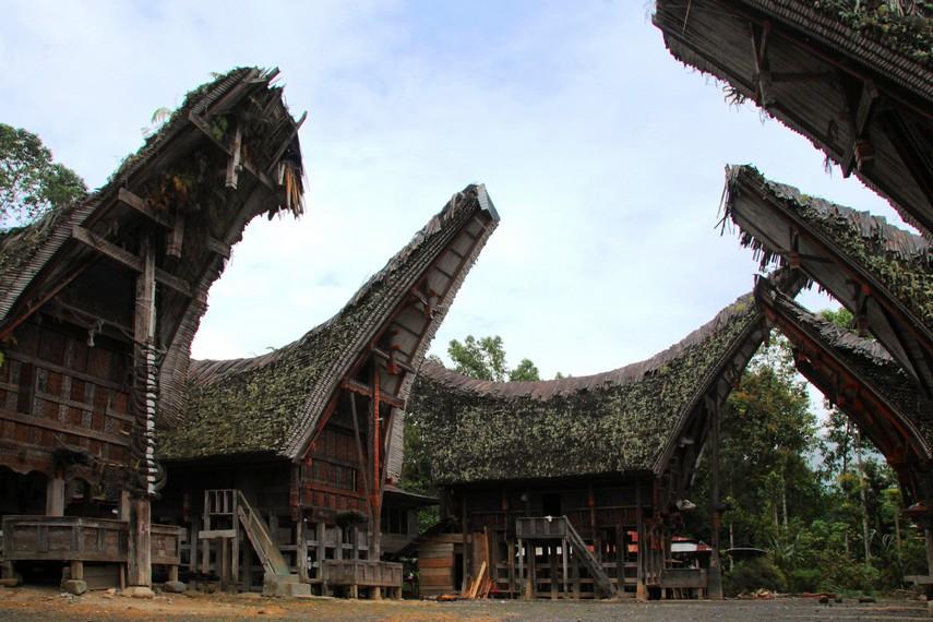 Atap tongkonan di Desa Pallawa yang secara alami ditumbuhi tanaman karena sudah berusia hingga ratusan tahun