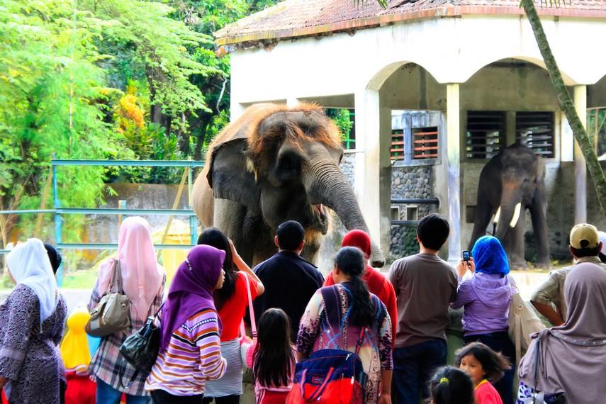 Atraksi gajah yang menarik perhatian pengunjung di Kebun Binatang Gembira Loka