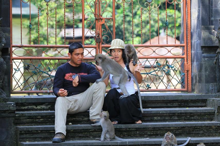Interaksi pengunjung dengan monyet penghuni Alas Kedaton