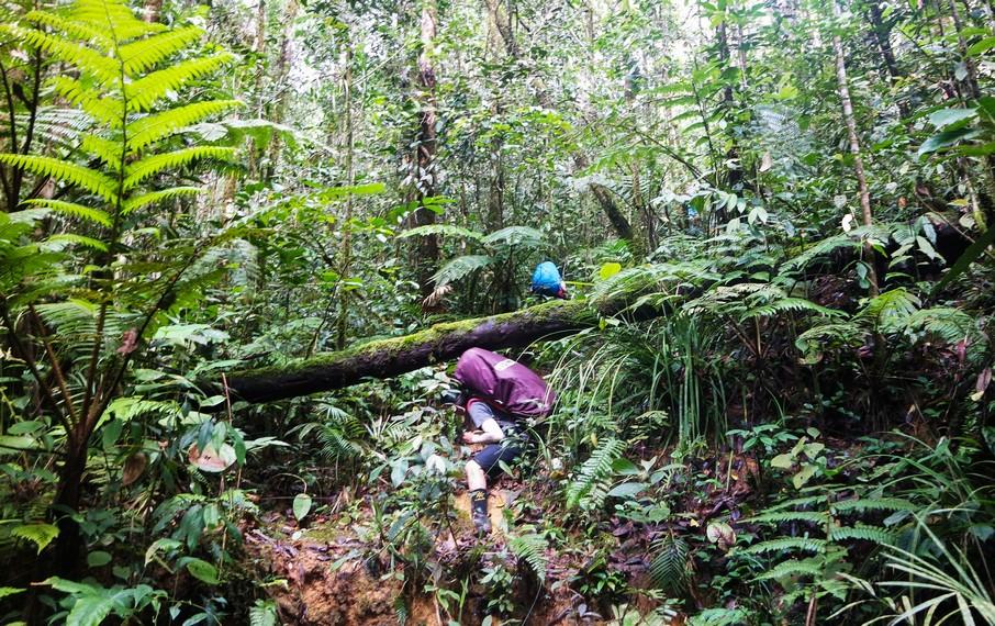 Banyak batang pohon melintas di jalur