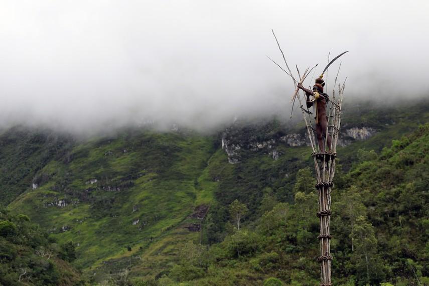 Bapak Yali sang Kepala Suku naik ke menara pengintai dan bersiaga jika musuh mendekat