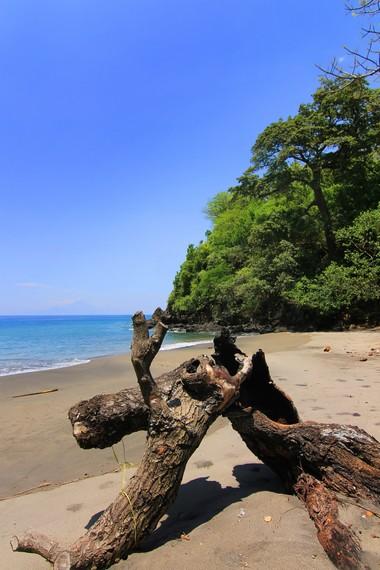 Batang pohon yang dibiarkan terbengkalai menjadi dekorasi yang cantik di Pantai Malimbu