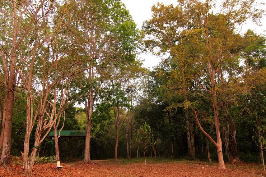 Beberapa tumbuhan di Taman Nasional Way Kanan ini tergolong langka dan keberadaannya harus dilindungi secara intensif