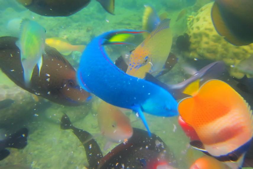 Bermain dengan ikan penghuni Gili Nanggu menjadi hal menyenangkan saat ber-<i></noscript><img class=