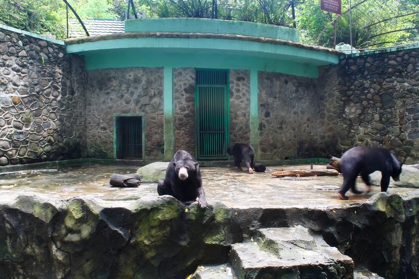 Beruang-beruang yang bisa diajak berinteraksi oleh para pengunjung kebun binatang