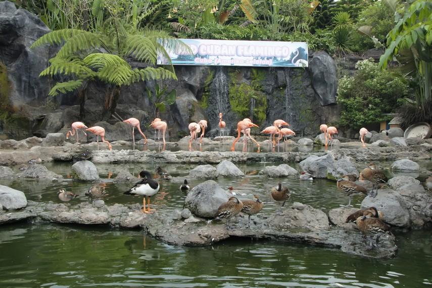 Burung Flamingo bisa Anda saksikan di arena ini