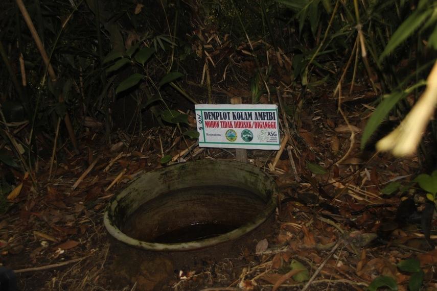 Demplot Kolam Amphibi yang terdapat di sekitar Goa Jepang Kaliurang