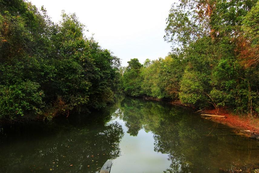 Di sisi kanan dan kiri sungai, aktivitas berbagai satwa liar dapat teramati
