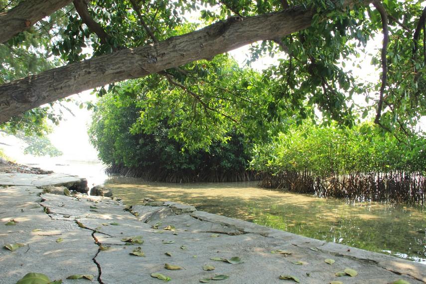 Di sekitar Pulau Pramuka, dapat terlihat hutan manggrove yang tumbuh subur