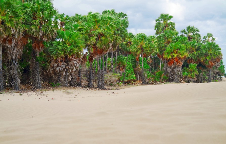 Dihiasi oleh pepohonan Lontar yang tumbuh di sekitar pantai