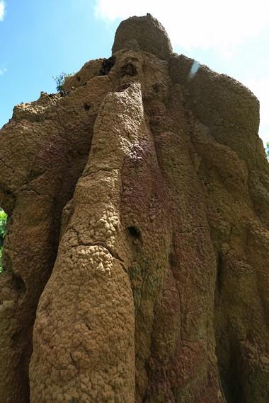Dinding Musamus terbuat dari rumput kering, tanah, dan air liur rayap sebagai bahan perekatnya