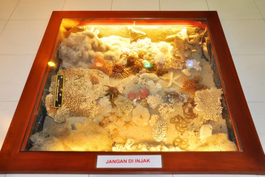 Diorama ekosistem bawah laut yang terdapat di Kebun Binatang Gembira Loka