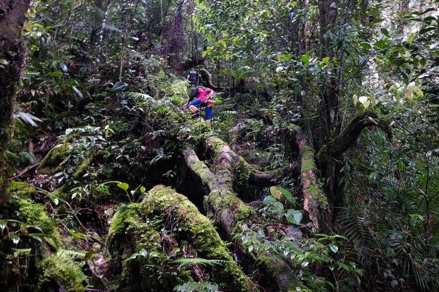 Gunung Bukit Raya adalah salah satu gunung dalam rangkaian 7 gunung tertinggi di Indonesia