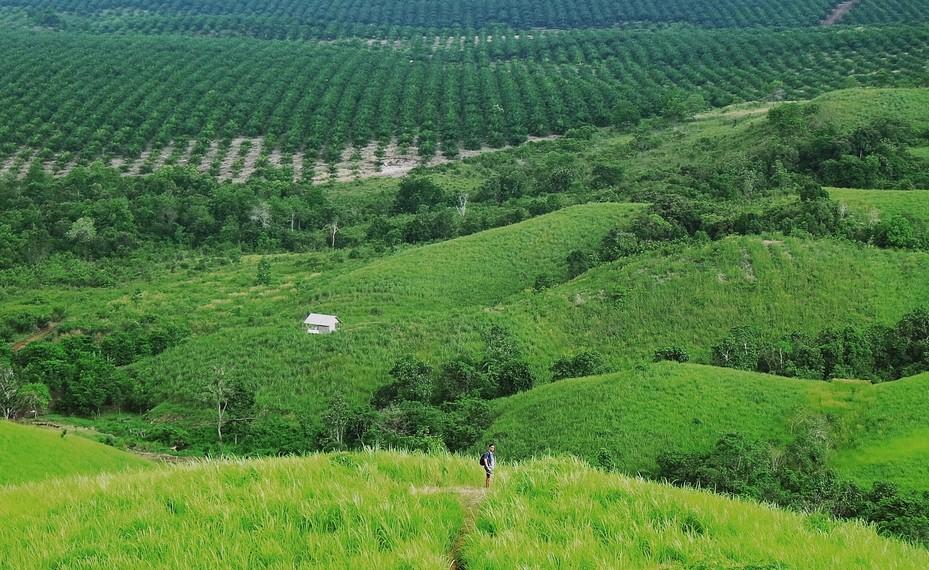 Hamparan kelapa sawit terlihat dari kejauhan