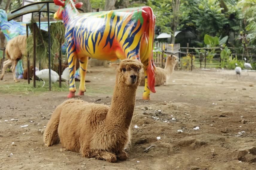 Hewan-hewan yang ada di Batu Secret Zoo dibiarkan hidup seperti dihabitat aslinya