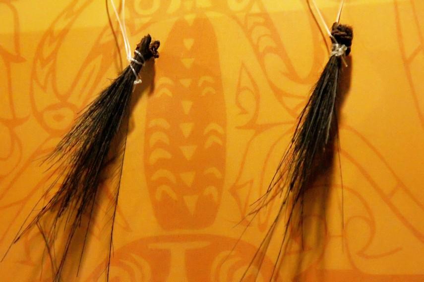 Hiasan telinga Suku Asmat. Hiasan ini digunakan oleh laki-laki ketika hendak berburu dan menebang batang pohon bakau