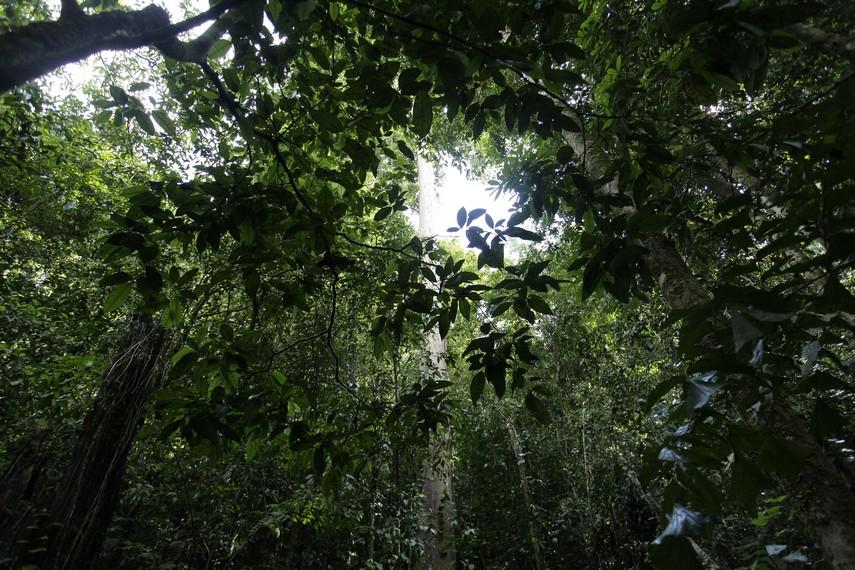 Hutan Tropis dalam Taman Nasional Manusela