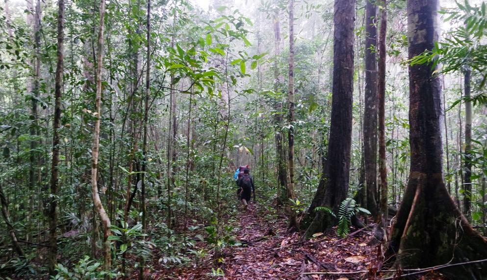 Hutan rapat sepanjang trek menuju puncak Bukit Raya