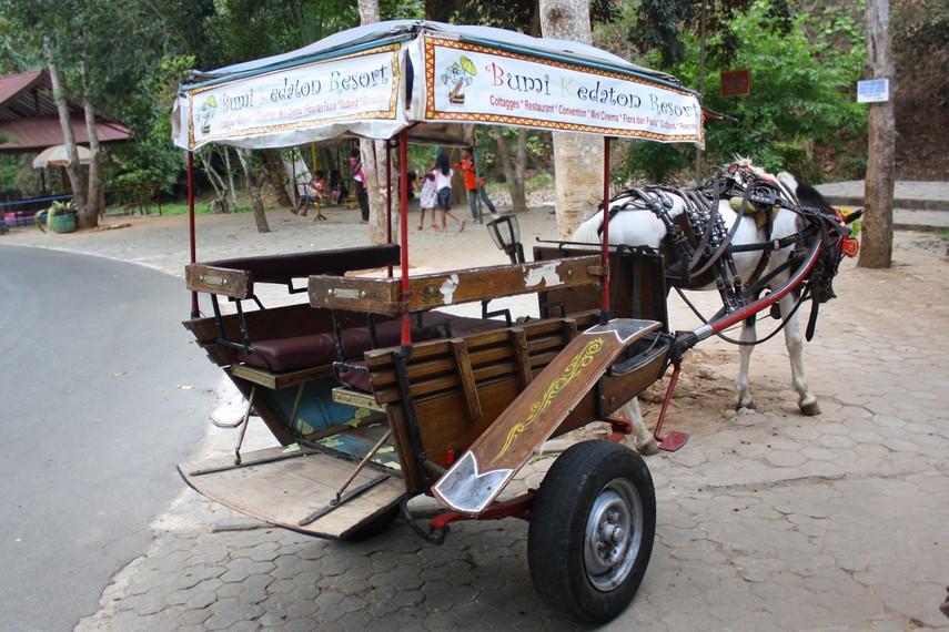 Pengunjung dapat menggunakan delman untuk berkeliling kawasan wisata Bumi Kedaton Resort