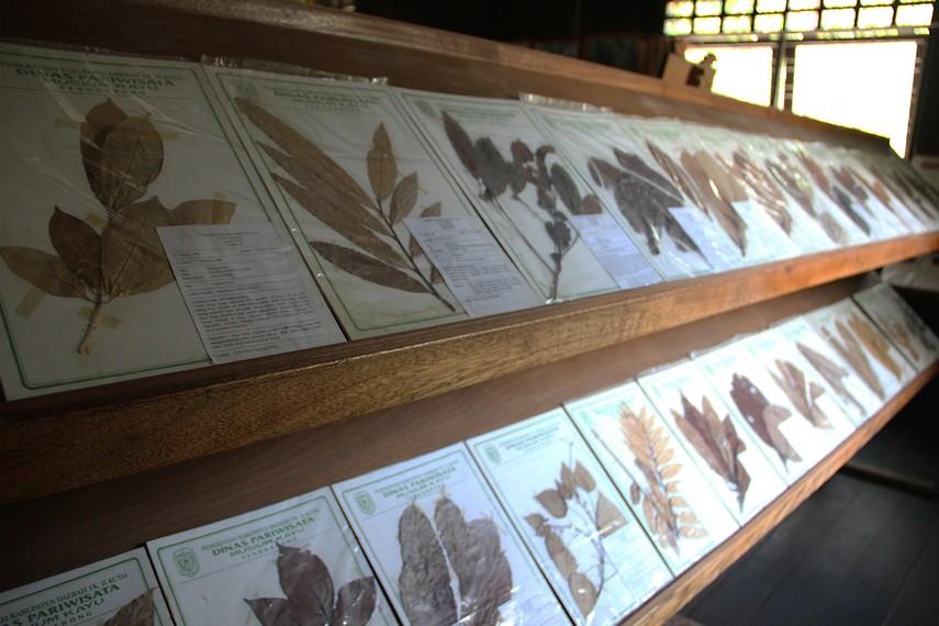 Awetan daun dari berbagai spesies flora yang tumbuh di Kalimantan merupakan salah satu koleksi tak ternilai yang dimiliki museum Tuah Himba