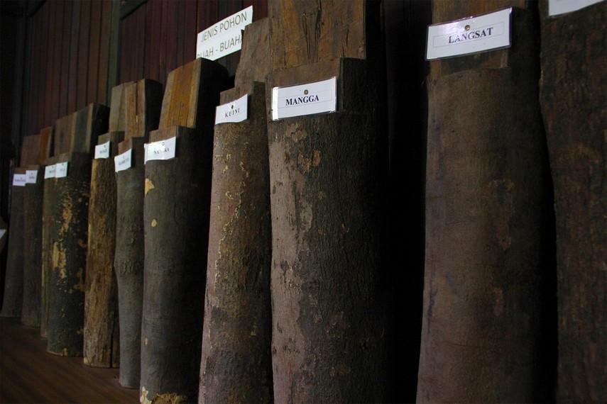 Terdapat 220 jenis kayu perdagangan yang menjadi koleksi museum Tuah Himba