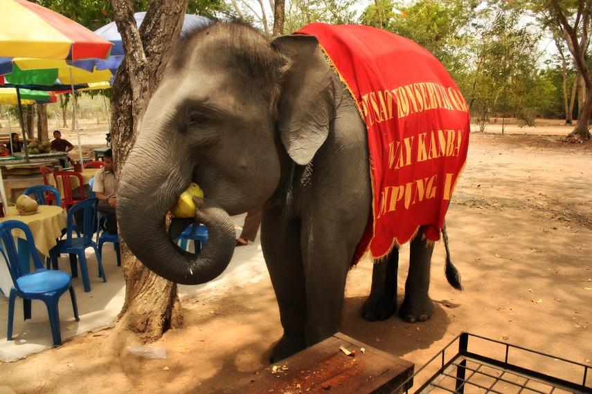 Di Pusat Konservasi Gajah pengunjung dapat berinteraksi dengan gajah-gajah yang sudah jinak