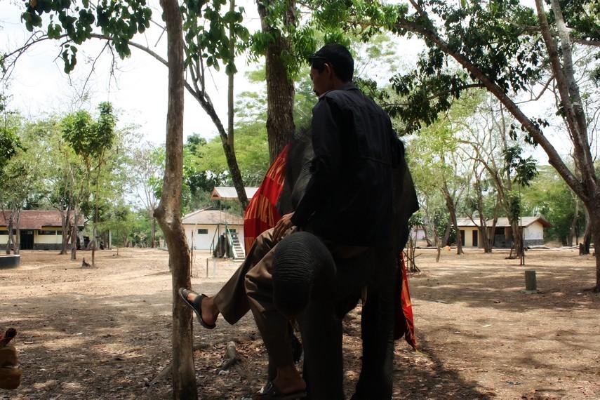 Atraksi gajah menggedong pawangnya salah satu yang bisa dilihat pengunjung di Pusat Konservasi Gajah Way Kambas