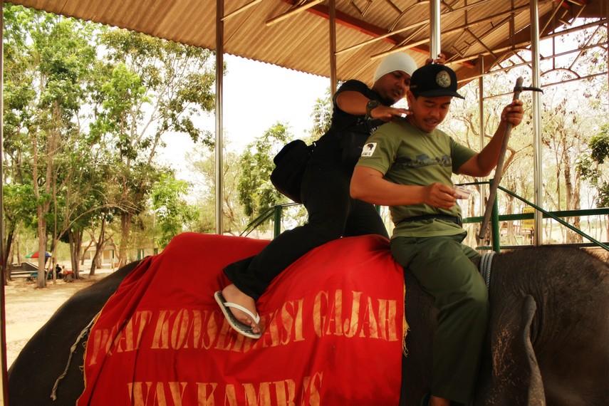 Pengunjung yang ingin berpetualang juga dapat melakukan tur melihat habitat gajah di alam liar