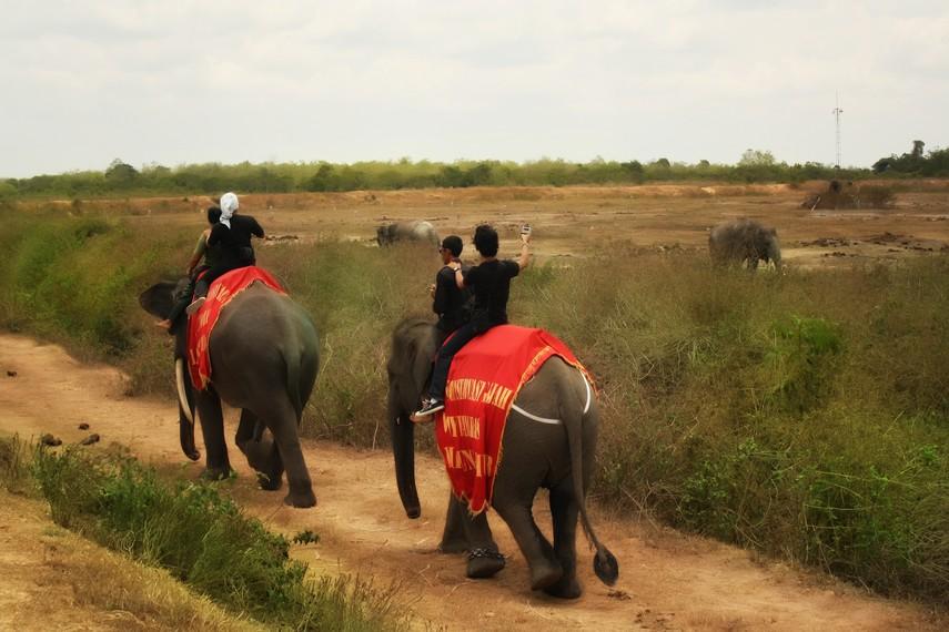 Populasi gajah Sumatera yang tersisa di Way Kambas hanya sekitar 200 ekor