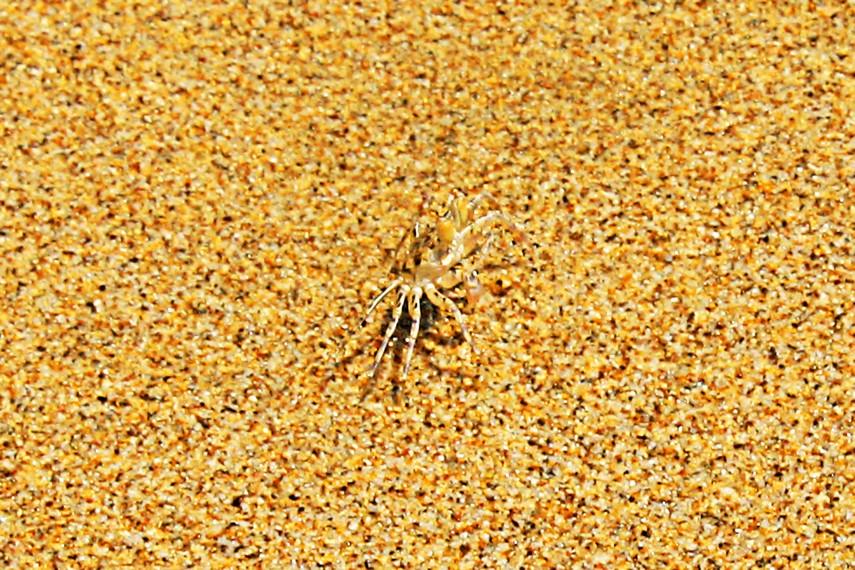 Hewan sejenis ketam dapat dengan mudah ditemukan di antara hamparan pasir putihnya