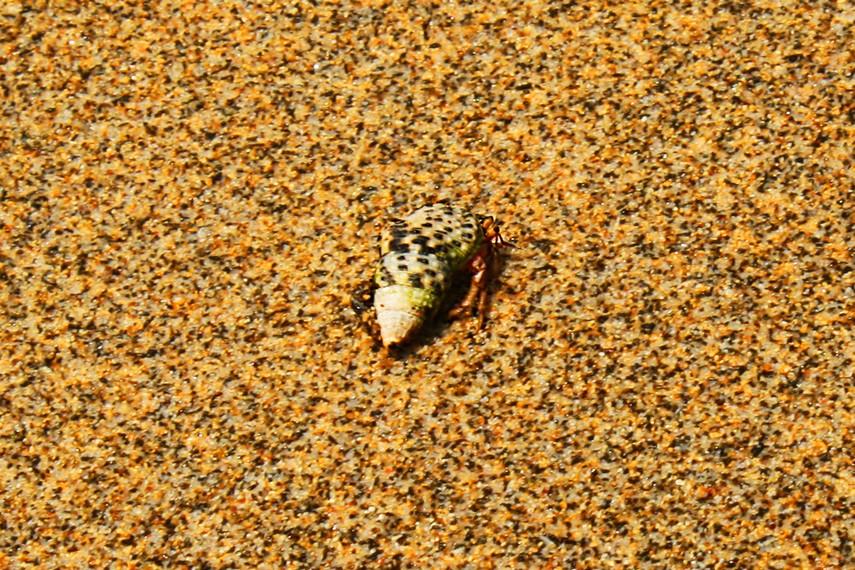 Mengamati hewan-hewan kecil seperti kelomang ini dapat menjadi pengalaman yang menyenangkan