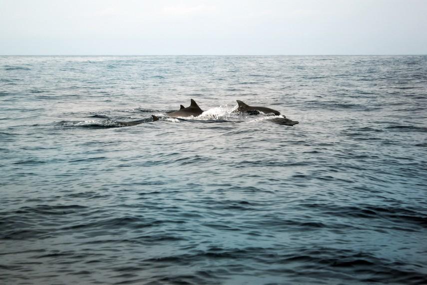 Hewan mamalia laut ini biasanya muncul antara pukul 06.00-08.00