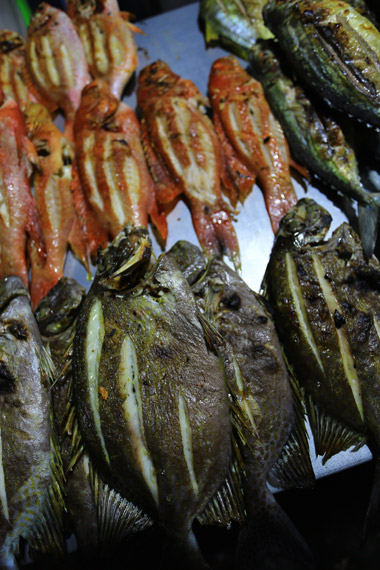 Penampilan Ikan Bobara yang selalu menggugah selera